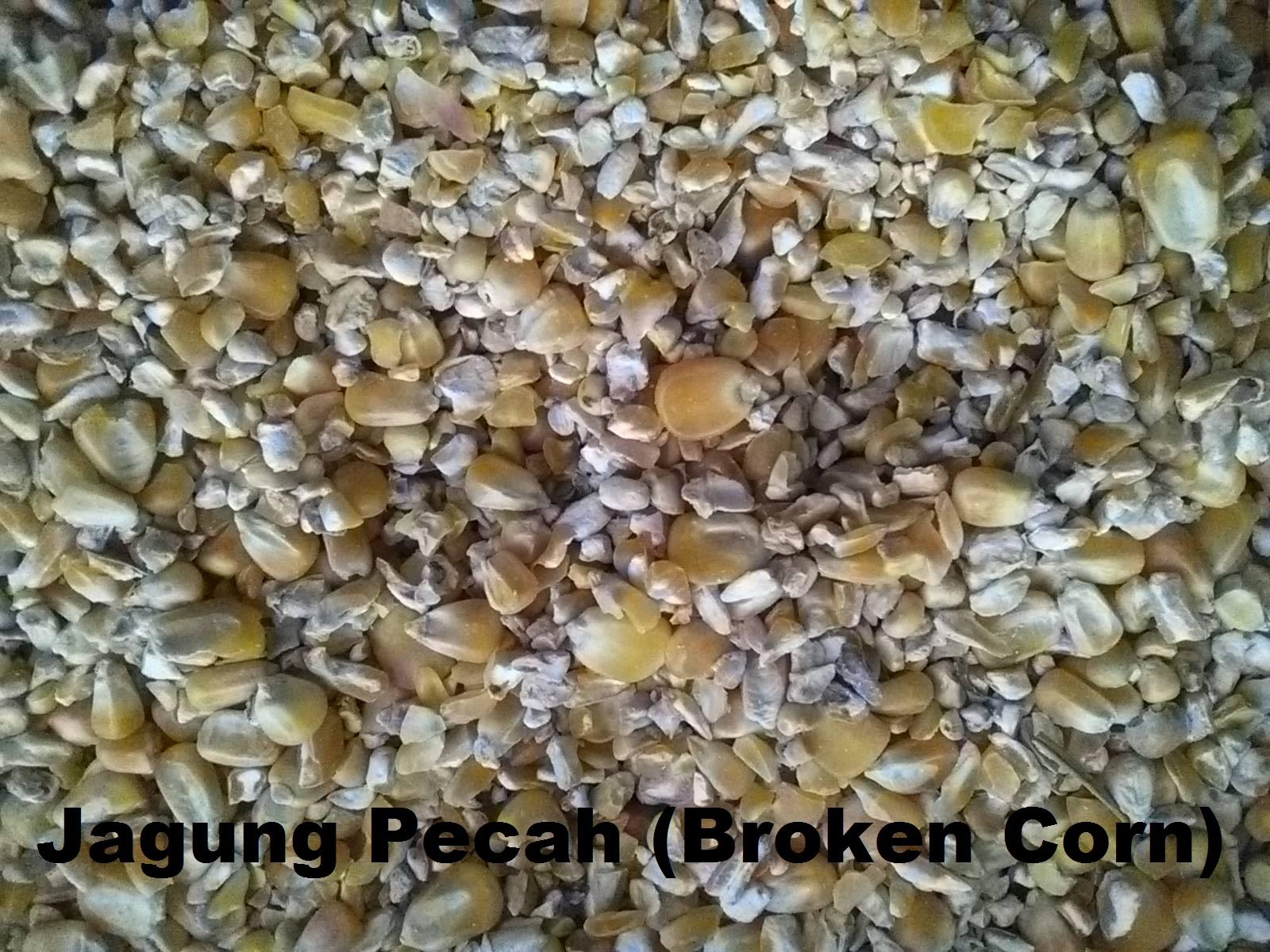 Menir Jagung / Jagung Pecah (Broken Corn) untuk Pakan ternak dan baglog jamur