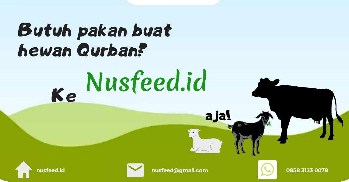 Butuh Pakan hewan Qurban?